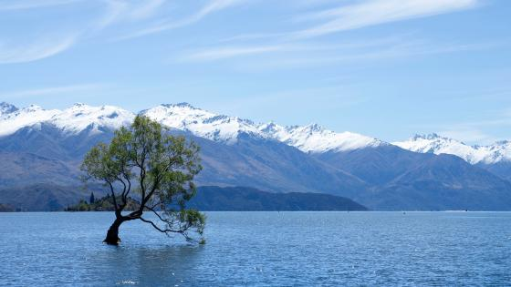 Solitary tree in the middle of Lake Wanaka wallpaper