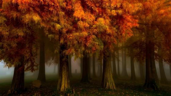Red forest at fall wallpaper