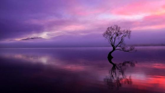 Lonely tree reflection wallpaper
