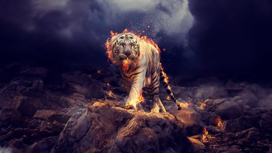 Fire Tiger wallpaper