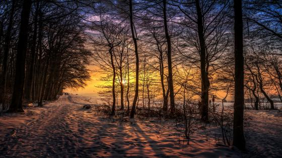 Winter sunset in nature wallpaper
