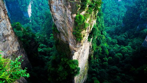 Avatar Hallelujah Mountain (Zhangjiajie Stone Forest) wallpaper