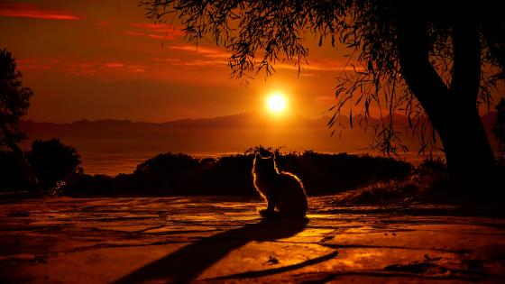 Cat silhouette in sunset wallpaper