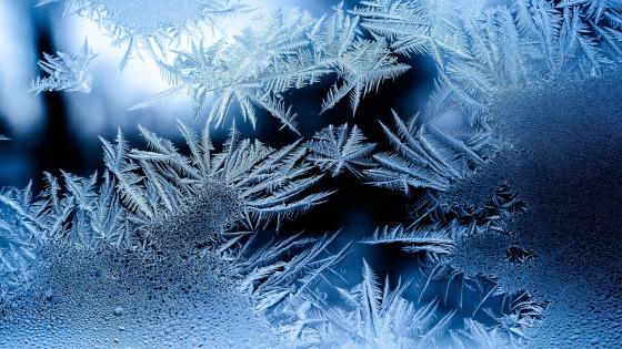 Frostwork wallpaper