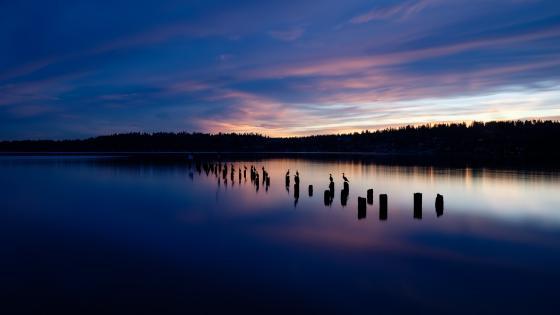Beautiful lake in blue hour wallpaper
