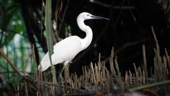 Bird in mangroves wallpaper