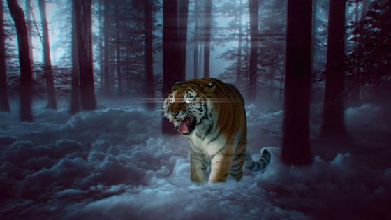 Wild tiger in the forest wallpaper