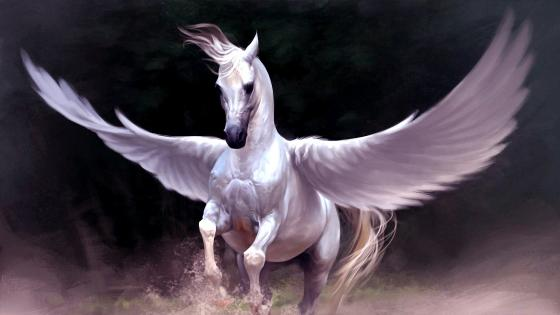 White Pegasus wallpaper
