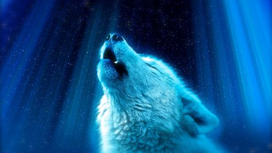 Wolf howling in the starlight wallpaper