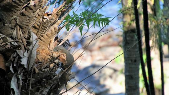 Squirrel nesting wallpaper