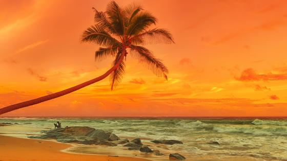 Palm tree above the sea at sunset wallpaper
