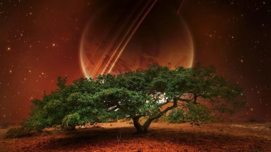Solitary tree and a ringed planet on the sky wallpaper