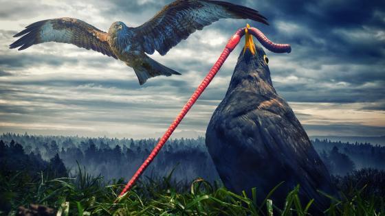 Birds digital art wallpaper