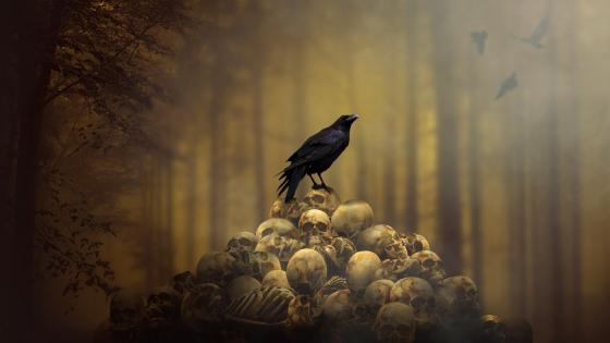 Crow on skulls wallpaper