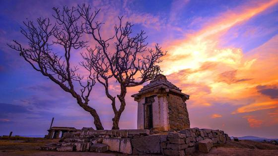 Lone dry tree on the ancient Ruin wallpaper