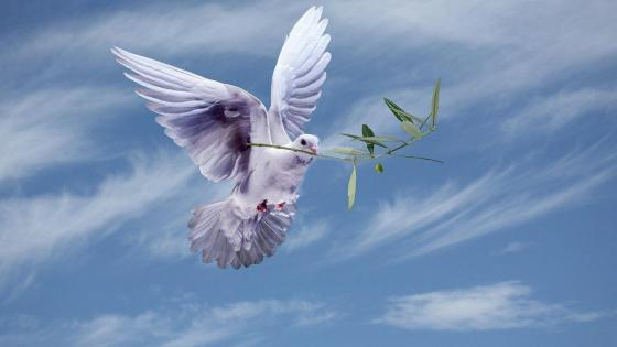Dove with Olive branch Peace symbol wallpaper