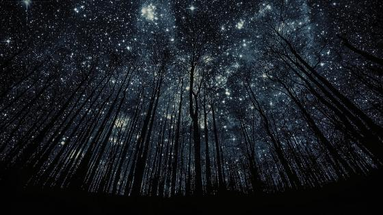 Starry sky low angle view wallpaper