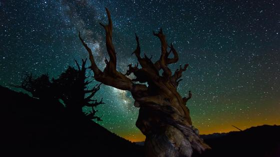 Dry tree under the milky way wallpaper