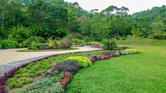 Scenery from wet zone botanical garden wallpaper