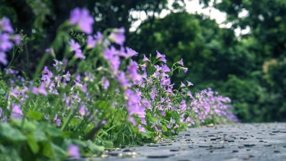 Flowery walkway wallpaper