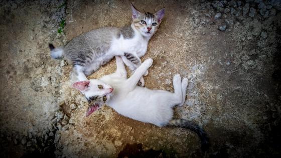 Lovely Kittens wallpaper