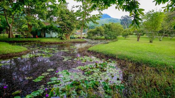 Seethawaka Wet Zone Botanical Garden wallpaper
