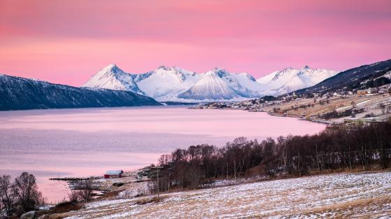 Pink winter landscape wallpaper