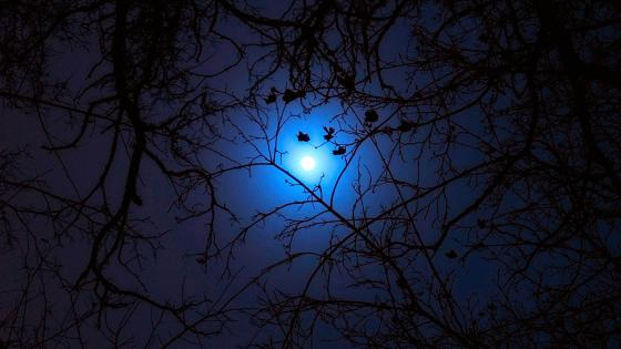 Night moon between the branches of trees wallpaper