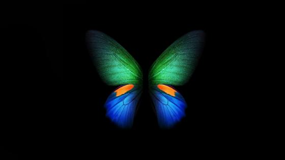 Butterfly 🦋 wallpaper