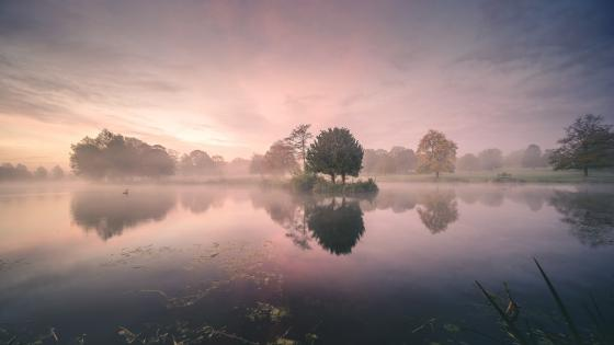 Purple misty dawn reflection wallpaper