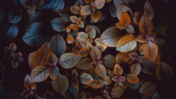 Decorative nettle wallpaper