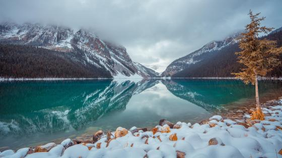 Lake Louise in winter wallpaper