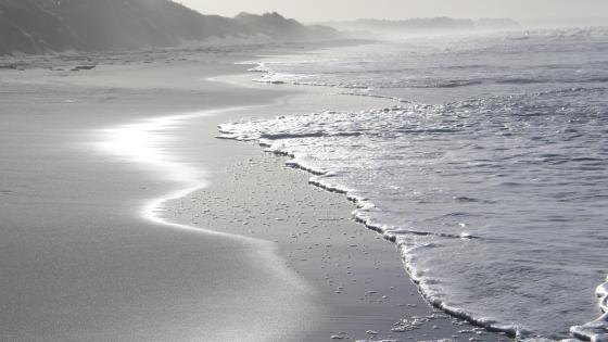 Monochrome beach wallpaper