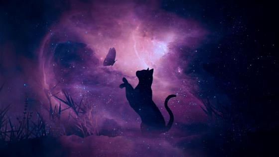 Cat playing with butterfly wallpaper