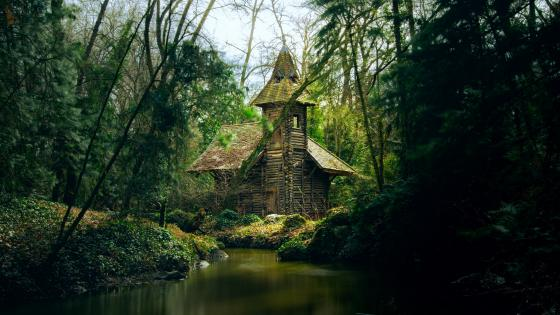 Wooden cottage in a deep forest wallpaper