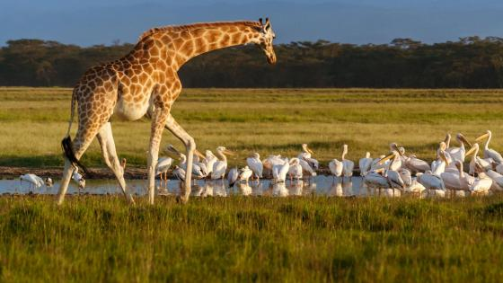 Lake Nakuru National Park wildlife wallpaper