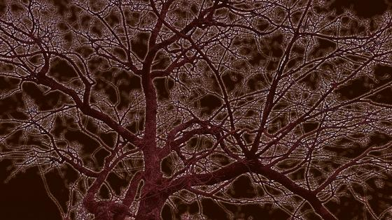 Tree branches towards a red sky wallpaper