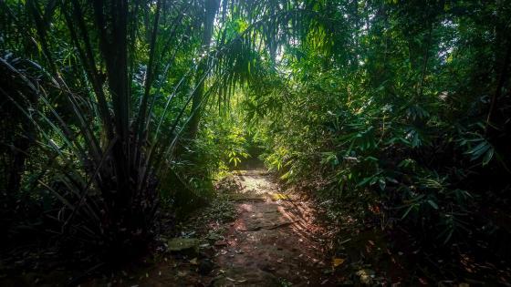path way to a Buddhist monastery wallpaper