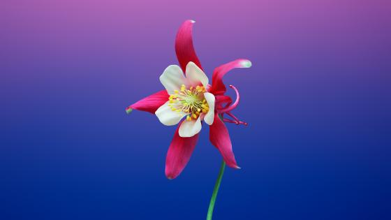 Flower in front of cut out background wallpaper