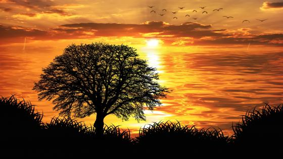 Solitary tree silhouette in the sunset wallpaper