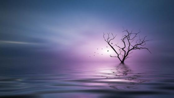 Solitary dry tree in the water wallpaper