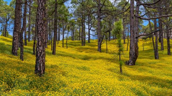 Yellow flower carpet wallpaper
