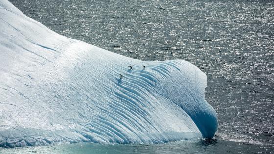 Penguins on an Iceberg in Antarctica wallpaper