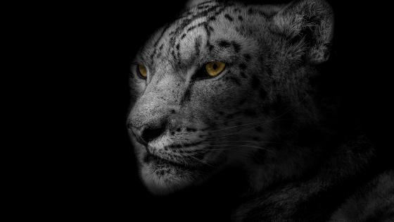 Yellow-eyed leopard wallpaper