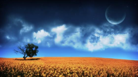 Lone tree in the canola field wallpaper