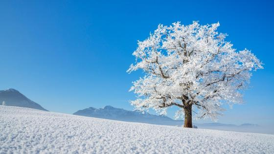 Lonely tree in Germany wallpaper