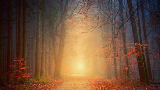 Blurry autumn forest trail wallpaper
