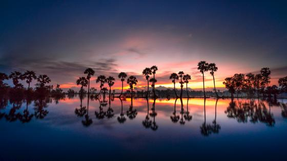 Palms reflection wallpaper