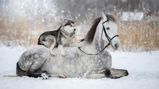 Friendship between a horse and a dog wallpaper
