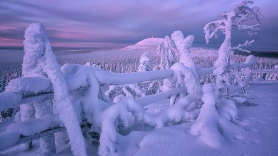 Lapland wallpaper
